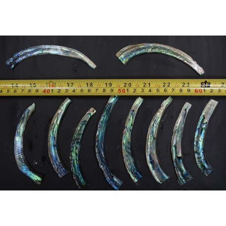 Curved Abalone Purfle Radius RAW BLANK (100 Grams/ Unit)
