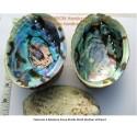 Вьетнам Abalone Shell Пауа Великолепный