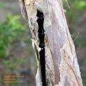 Organische Horn Haar Bambusrohr
