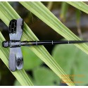 Dargonfly organische Horn Haar Stick