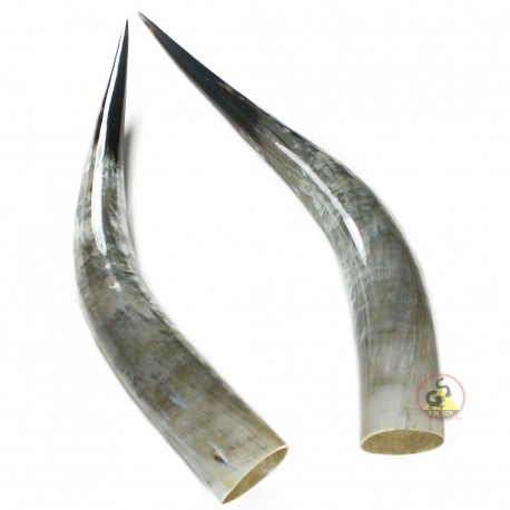 Polished Pair Horns