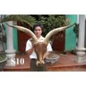 Vietnam super Horn mount schöne neue Halterung aus Stirn schön