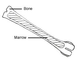 Simple drawing for dear bone core